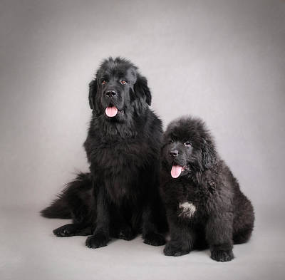 Newfoundland Puppy Photograph - Mother And Son by Waldek Dabrowski