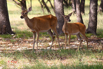 Photograph - Mother And Yearling Deer by Roena King