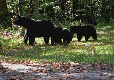 Mother Bear And Three Cubs Art Print by Kathy Long