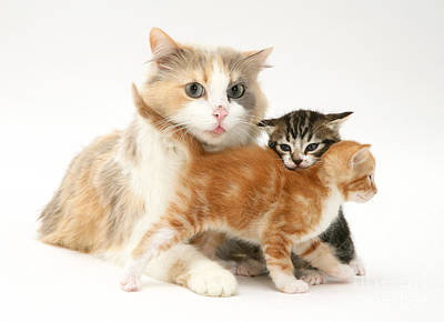 Bitch Photograph - Mother Cat And Kittens by Jane Burton