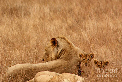Mother Lion With Family Art Print