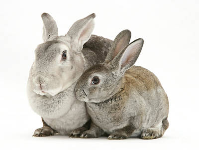 Photograph - Mother Rabbit And Young by Jane Burton