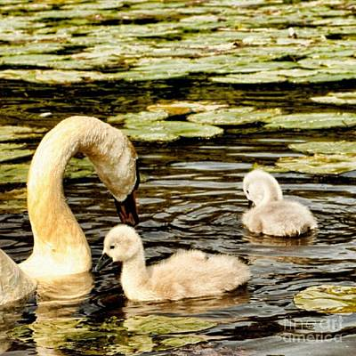 Lilies Photograph - Mothers Love by YoursByShores Isabella Shores