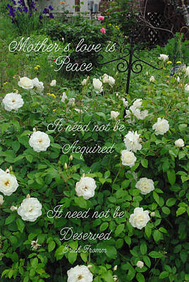 Photograph - Mother's Love Is Peace White Roses by Robyn Stacey