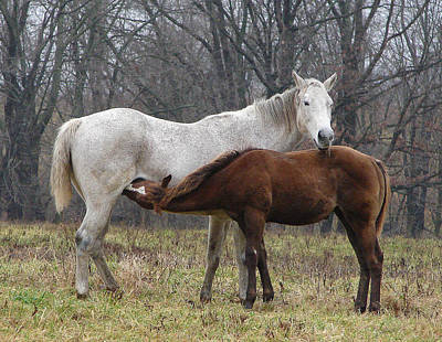Chestnut Dun Horse Photograph - Mother's Milk by Brian Stevens