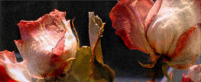 Photograph - Mother's Roses by Marilyn Marchant
