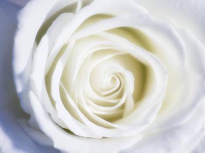 Linda Dunn Photograph - Mother's White Rose by Linda Dunn