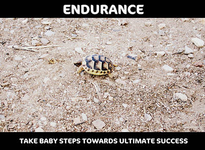 Photograph - Motivational Endurance Of Little Turtle Take Baby Steps Towards Ultimate Success by John Shiron