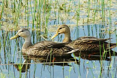 Mottled Duck Pair Art Print by Lynda Dawson-Youngclaus