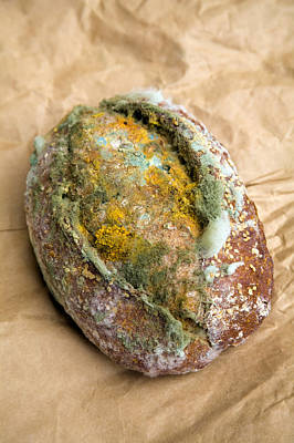 Mouldy Bread Roll Art Print