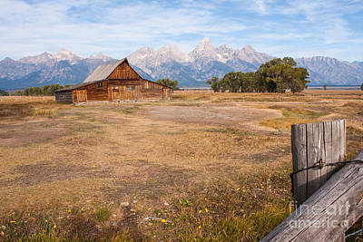 Photograph - Moulton Baron On Mormon Row Late Summer 2012  by Katie LaSalle-Lowery