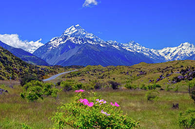 Photograph - Mount Cook With Mount Cook Lily In The Foreground by Harry Strharsky