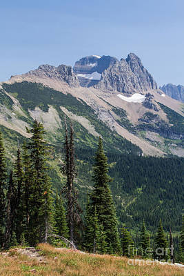 Art Print featuring the photograph Mount Gould And Subalpine Fir by Katie LaSalle-Lowery