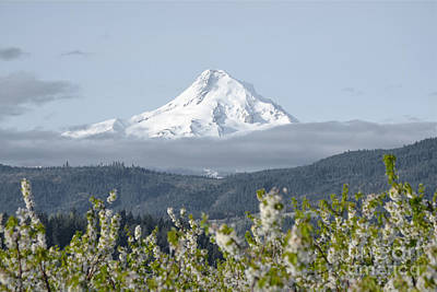 Photograph - Mount Hood Valley by Andrea Hazel Ihlefeld
