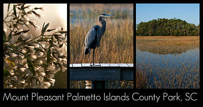 Blue Herron Photograph - Mount Pleasant Palmetto Islands County Park  by Melissa Wyatt