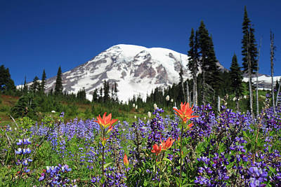 Photograph - Mount Rainier Wildflowers by Pierre Leclerc Photography