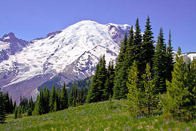 Photograph - Mount Rainier X by David Patterson
