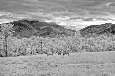 Horses Photograph - Mountain Grazing by Joann Vitali