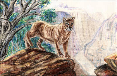 Painting - Mountain Lion by Clara Sue Beym