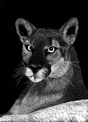 Mountain Lion Art Print by Kume Bryant