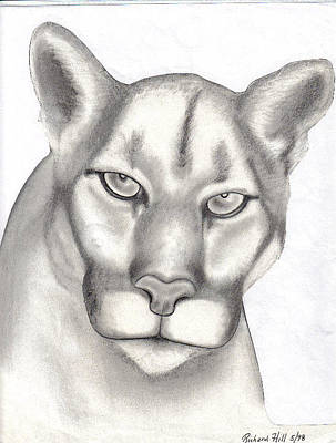 T-shirt Designs Drawing - Mountain Lion by Rick Hill