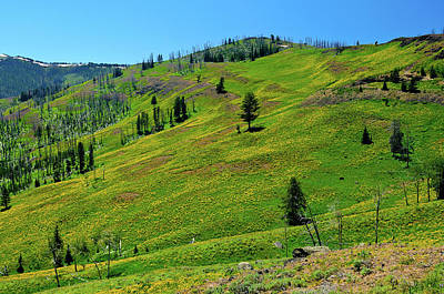 Yellowstone Photograph - Mountain Meadow by Greg Norrell