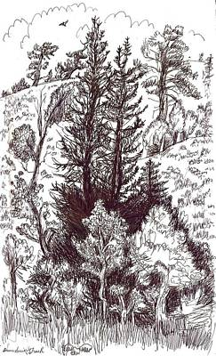 Mountain Pines And Aspen Field Sketch Art Print