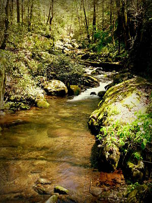 Cindy Wright Photograph - Mountain Stream by Cindy Wright