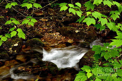Mountain Stream In Spring Print by Thomas R Fletcher