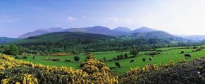 Mourne Mountains, Co Down, Ireland Art Print