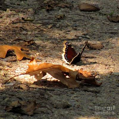 Photograph - Mourning Cloak by Marilyn Smith