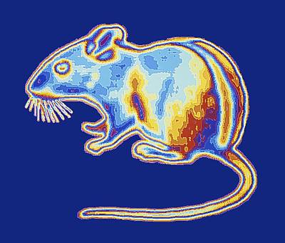 Thermographic Photograph - Mouse, Infrared, Computer Artwork by Pasieka