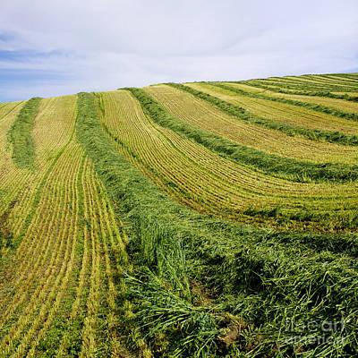 Mowed Field. Limagne. Auvergne. France. Europe.. Art Print by Bernard Jaubert