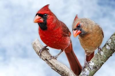 Mr. And Mrs. Cardinal Original