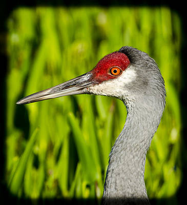 Photograph - Mr Crane by Mike Fitzgerald