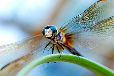 Dragon Fly Photograph - Mr Fly by Kendra Longfellow