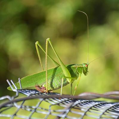 Art Print featuring the photograph Mr Grasshopper by Mary Zeman