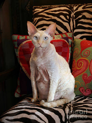 Devon Rex Cat Painting - Mr. Personality by Glennis Siverson