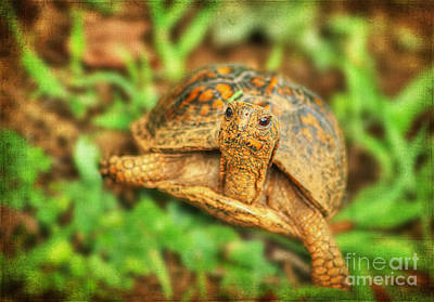 Mr Turtle II Print by Darren Fisher