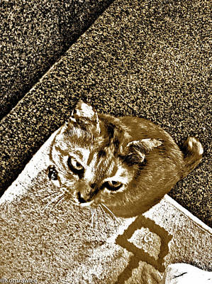 Kornrawiee Photograph - Ms Gato In Sepia by Kornrawiee Miu Miu