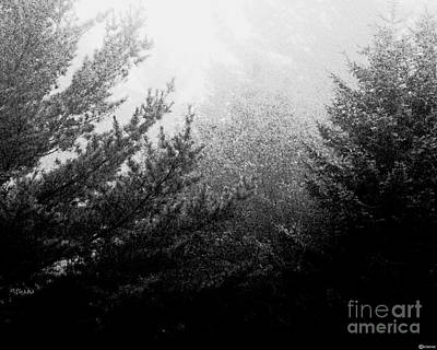 Photograph - Mt Desert Fog by Lizi Beard-Ward