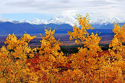Photograph - Mt. Hayes Through The Aspens by Alan Lenk