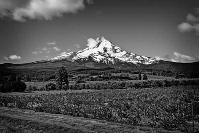Photograph - Mt. Hood by Jason Smith