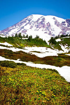Photograph - Mt. Rainier - Alpine Meadow by David Patterson