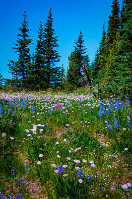 Photograph - Mt Rainier Meadow by David Patterson