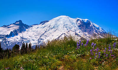 Photograph - Mt Rainier Meadow With Lupine by David Patterson