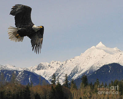 Photograph - Mt Shuksan Eagle by Jack Moskovita