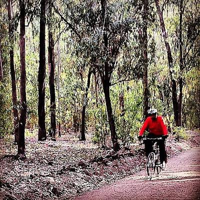 Cycling Photograph - #mtb #vtt #cycle #cycling #forest by Soredewa Seitai