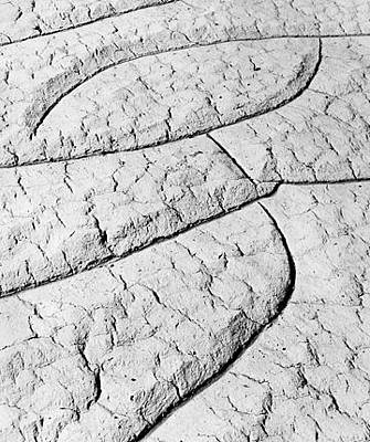 Mud Cracks Original by Scott Shaver