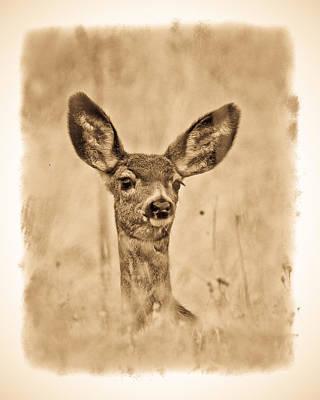 Photograph - Mule Deer Fawn by Steve McKinzie